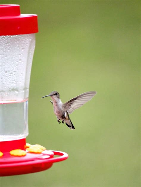 how to make homemade hummingbird food
