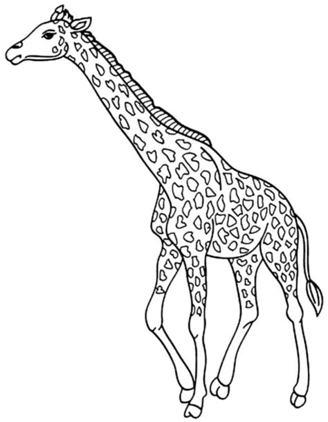cute coloring pages of giraffes print download giraffe coloring pages for kids to have fun