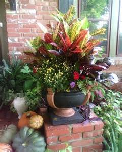 Croton Combo Planting Gardens Amp Potted Containers