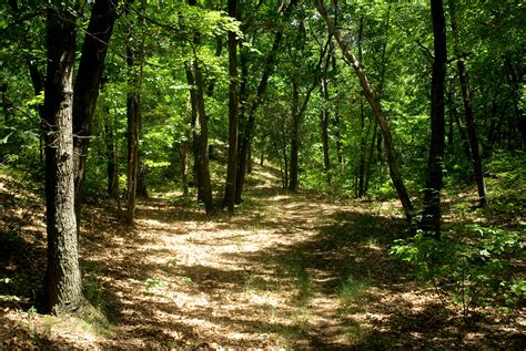 The Woods woods mike s look at