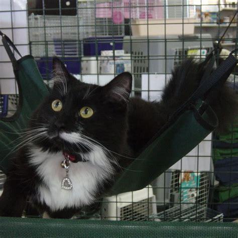 Sling Cat cat sling