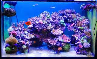 Glass Landscape Rocks by Hugo S Sps Tank Reef Central Online Community