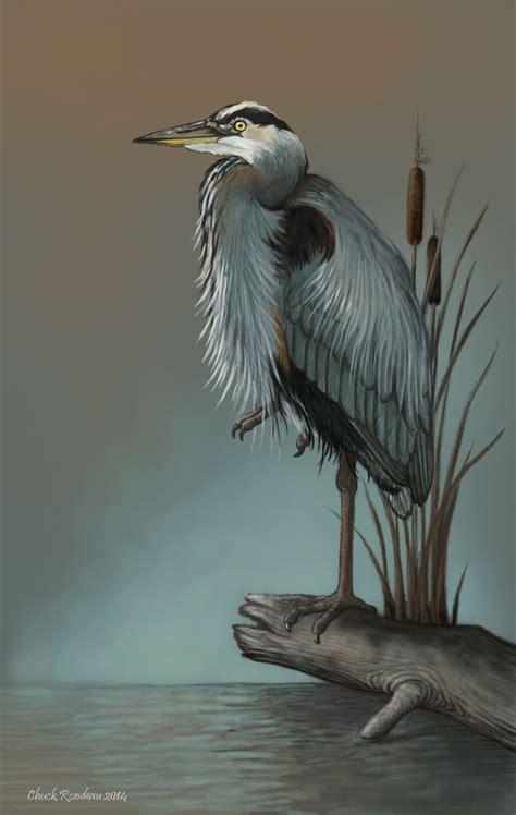 Great Blue Heron Drawing