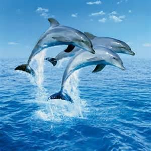 Star Stickers For Walls fotostat med tre springende delfiner i havet