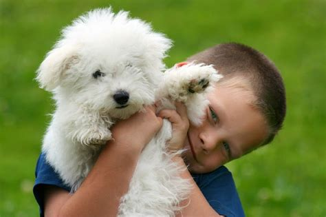 best small family dogs breeds for families breeds