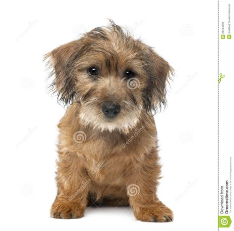 mixed breed puppies for free breed graphics breeds picture