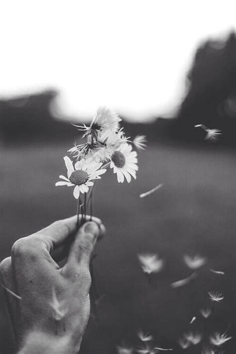 tumblr themes photography black and white vintage flowers tumblr black and white www pixshark com
