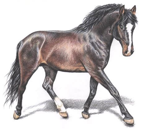 image gallery horse drawings to colour horse color pencil drawing nicole 5