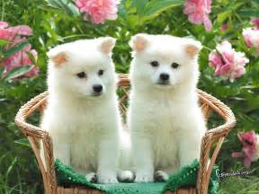 Animated cute naughty funny and beautiful puppies hd wide screen