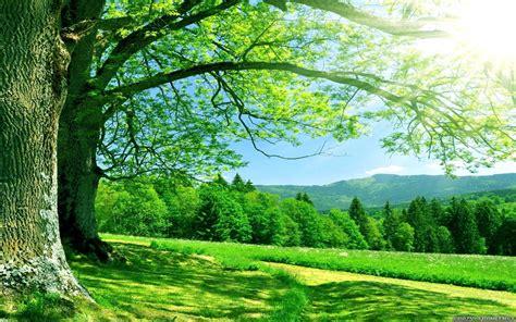 nature hd wallpapers for desktop wallpapers13 com