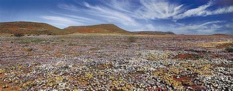 i fiori deserto i fiori nascono nel deserto ceggio in