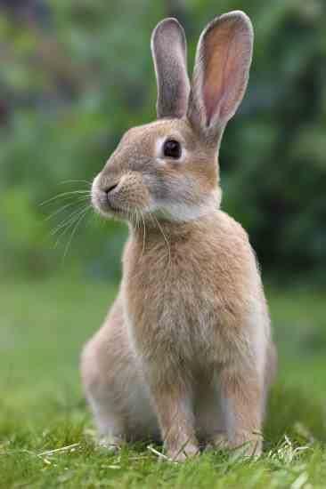 rabbit images raising rabbits for profit animals grit magazine