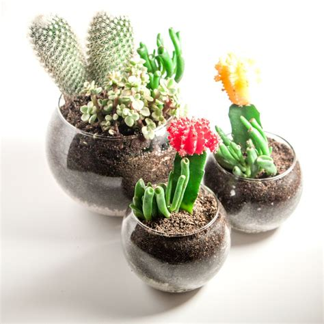 diy succulents diy succulent cactus terrariums thesassylife