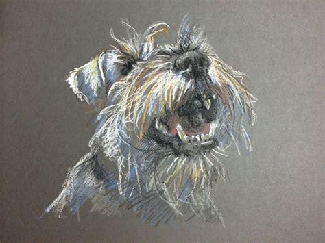 Pet Drawings Nz pastel on card by wilson new zealand www lucywilson