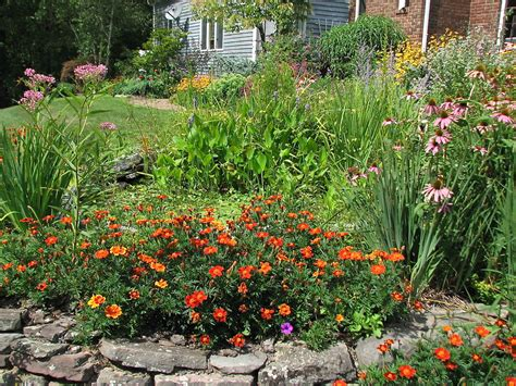 backyard butterfly garden naba north jersey butterfly club gardening
