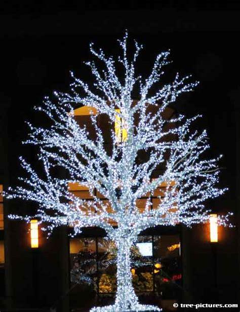 Nice Christmas Lightss #4: Whitechristmastree.jpg