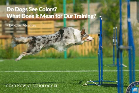do dogs see in color do dogs see colors what does it for our