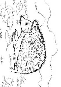 hedgehog coloring pages hedgehog coloring pages to and print for free