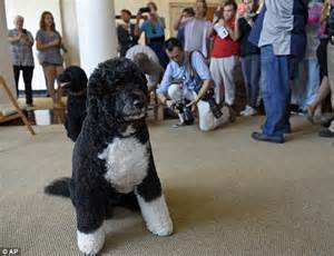 bo dog white house tourists visit the white house with cameras after ban to take photographs is lifted