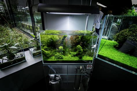 aquascaping ada ada nature aquarium gallery beautiful moments of the