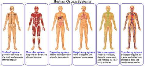 Section 35 1 Human Systems by Human Systems Human System