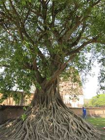 bodhi tree stuff i want to make pinterest
