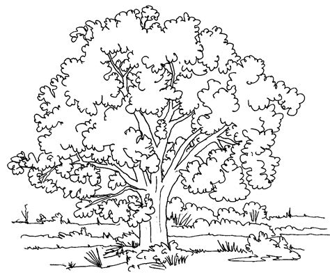 coloring pages of a big tree nature coloring pages coloringsuite com