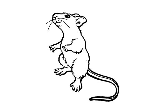 coloring pages for rat free printable rat coloring pages for kids