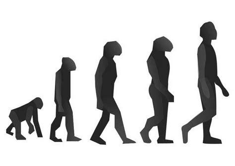 malvorlage evolution ausmalbild