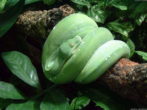 imagenes de serpientes verdes imagenes de animales de la selva foto de serpiente verde