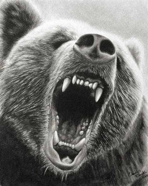 drawn bear roar pencil and in color drawn bear roar
