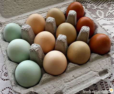 a rainbow of egg colors what breed of chicken lays which