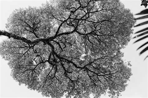 black and white tree pattern abstract patterns matthew paulson photography