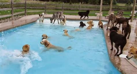 dogs in pool 25 best ideas about pools on diy yard big kennels and pond