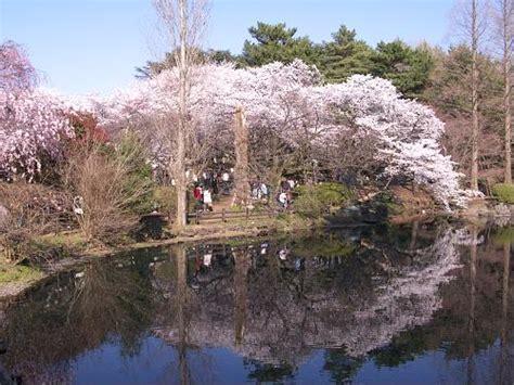 Shinjuku Gyoen Park   JapanVisitor Japan Travel Guide