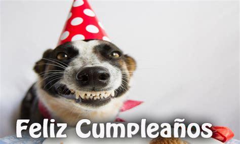 imagenes graciosas de cumpleaños con perros fotos para cumplea 241 os graciosas divertidas 174 para mujeres