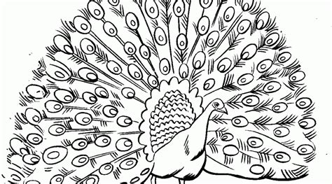 animal coloring pages peacock beautiful peacock coloring pages for girls print color craft
