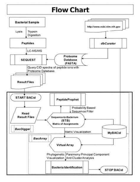 bacterial id flowchart bacterial identification diagram images how to guide and