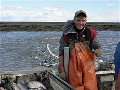 gene conservation laboratory bristol bay sockeye salmon application division of commercial