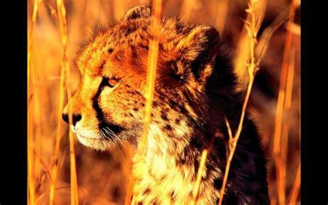 imagenes en 3d de animales salvajes animales salvajes download