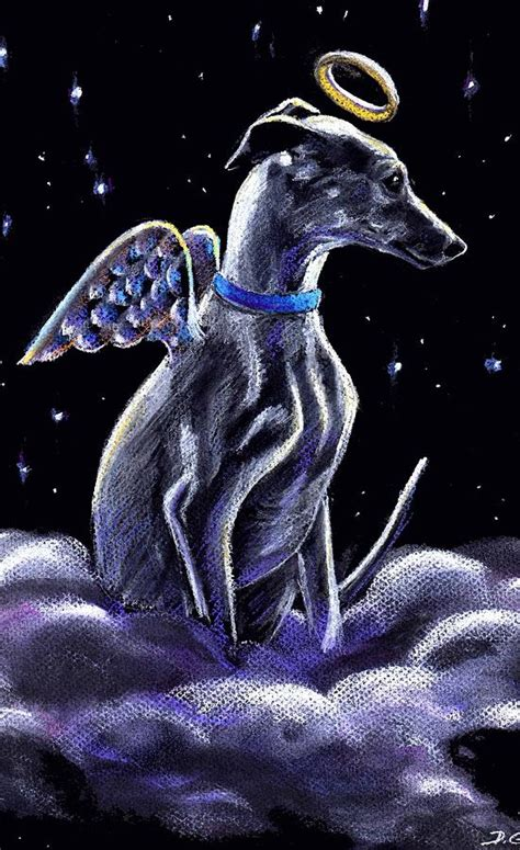 whippet italian greyhound angel pastel by darlene grubbs
