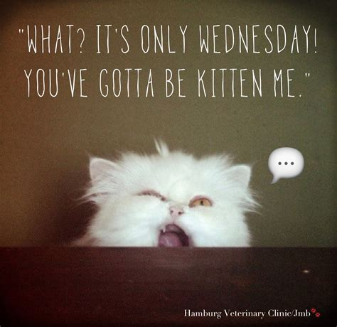 Funny Wednesday Memes - wednesday funny animal humor what it s only wednesday