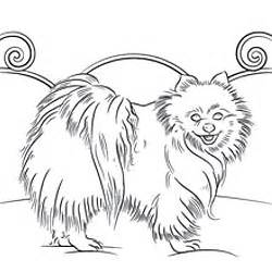pomeranian coloring pages pomeranian coloring page patterns coloring and pattern