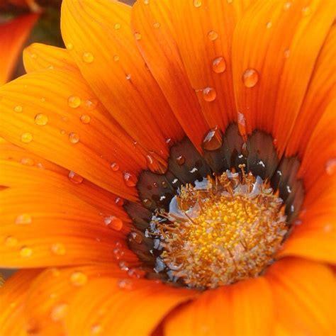 fiori alaskani floriterapia desio consulto di floriterapia vibrazionale