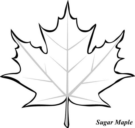 coloring page of a maple leaf leaf outlines coloring pages