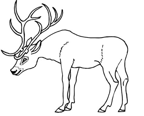 deer family coloring pages deer antler coloring page coloring pages