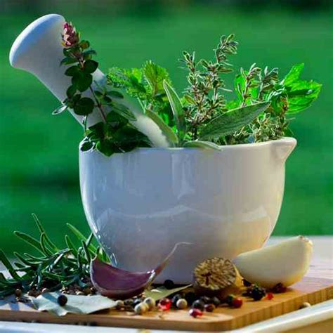 Make Plant - make your own herbal medicines health