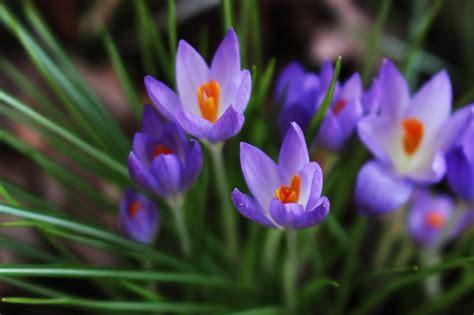 elenco fiori autunnali 40 fiori da mangiare food buono pulito e giusto
