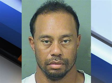 Busted For Dui by Tiger Woods Arrested For Dui Has Jokes Since No