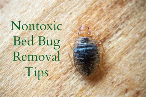 repel bed bugs 13 best images about insect repellent on pinterest